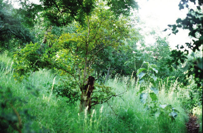 tropical evergreen forest in india