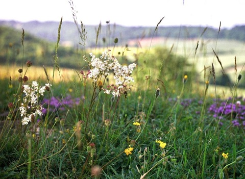 Grassland Ecosystem Project
